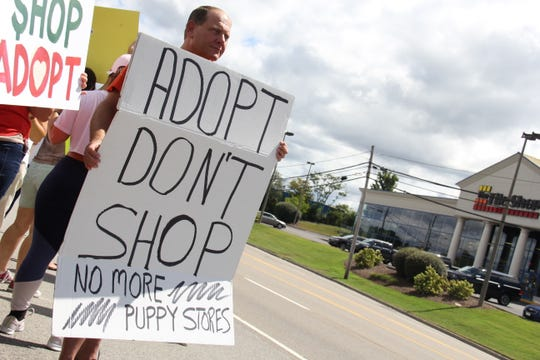 A man stands with his sign on the side of Kingston Pike near Puppy Zone as drivers pass and blow their horns in support of the protest Sept. 15.