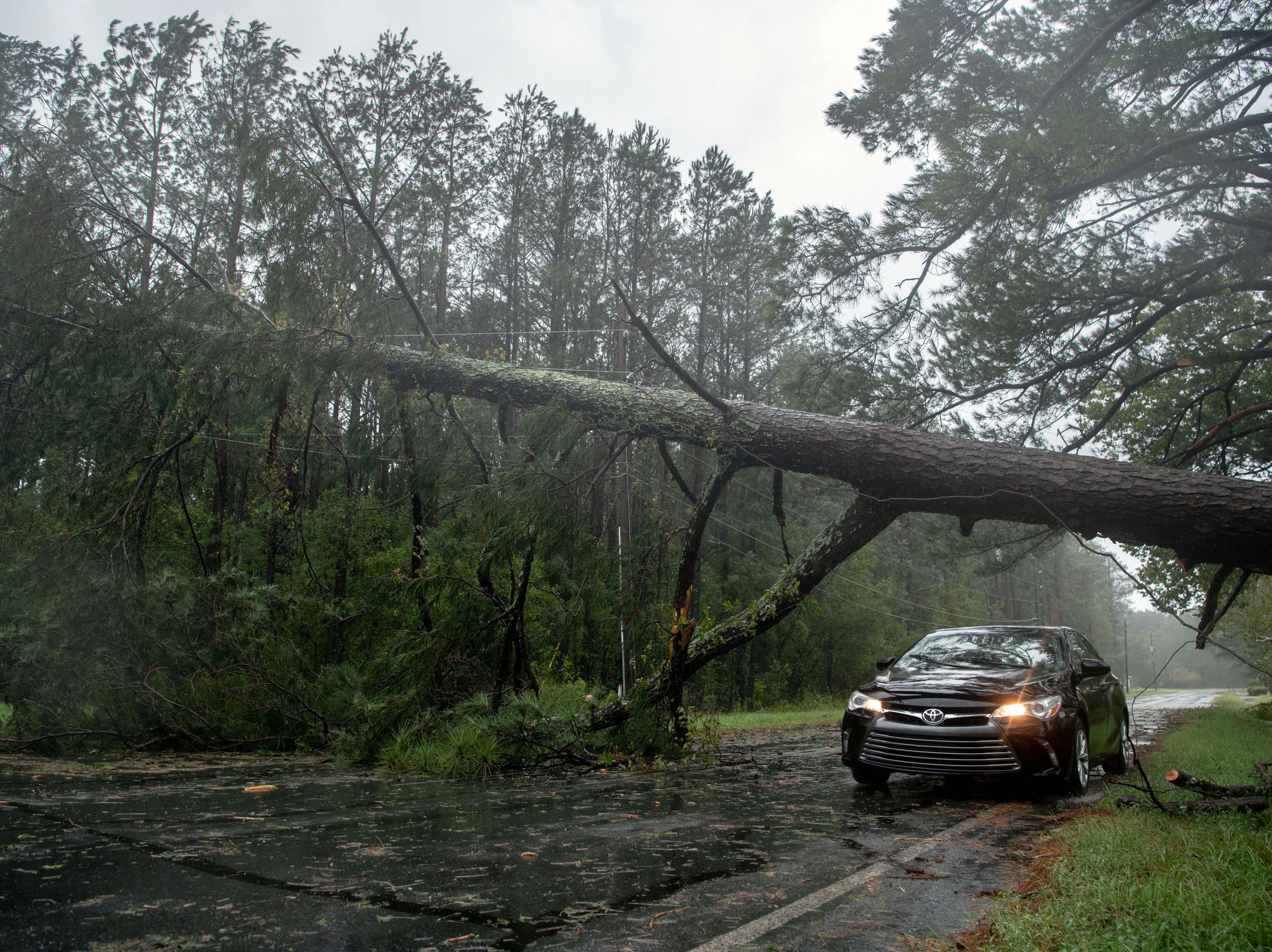 September 15, 2018; Lumberton, NC, USA;   A car passes under a fallen tree as rain from Tropical Storm Florence continues to fall in Lumberton, N.C., Saturday, Sept. 15, 2018.