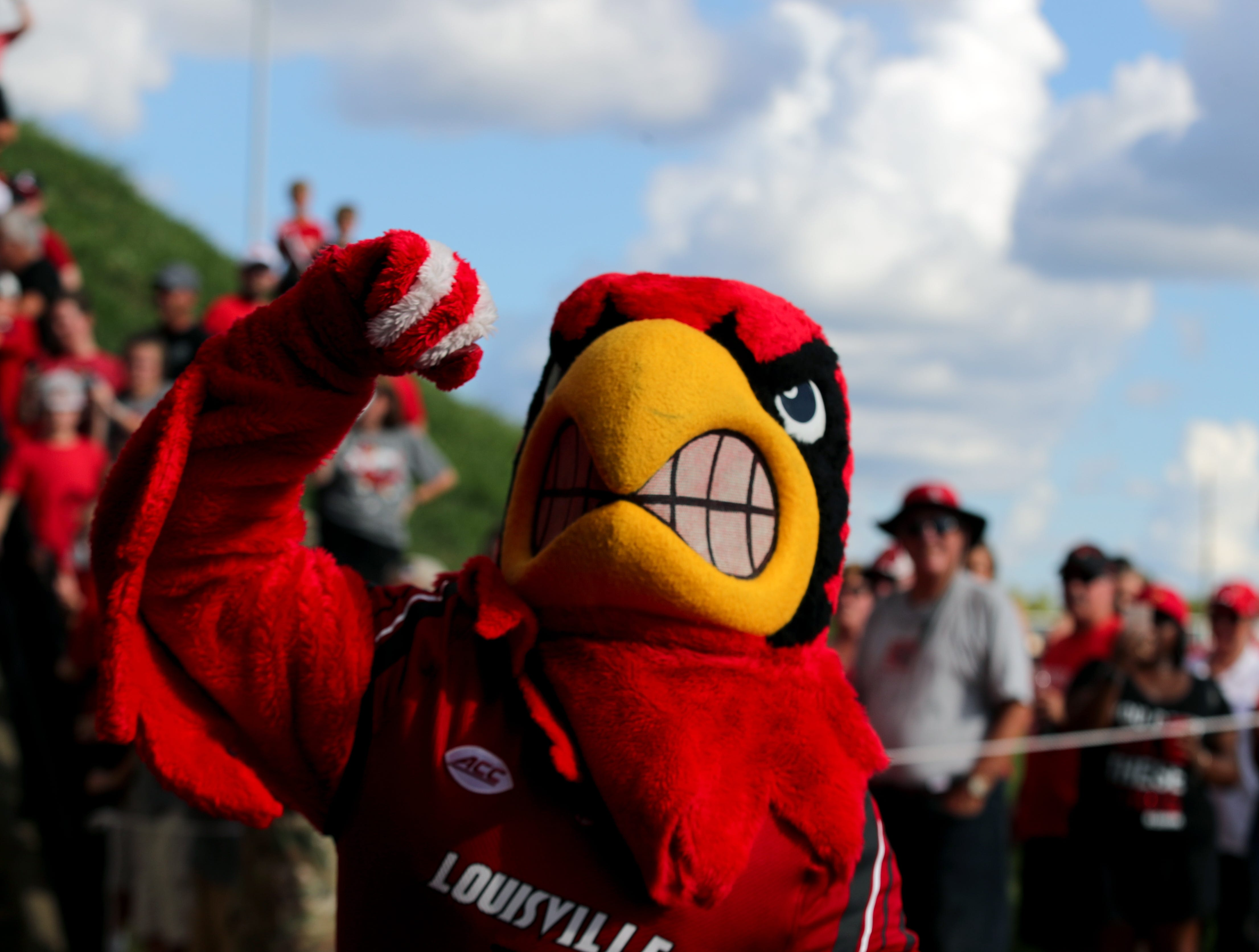 Louie the Cardinal leads the crowd in the C A R D S cheer during the Card March.