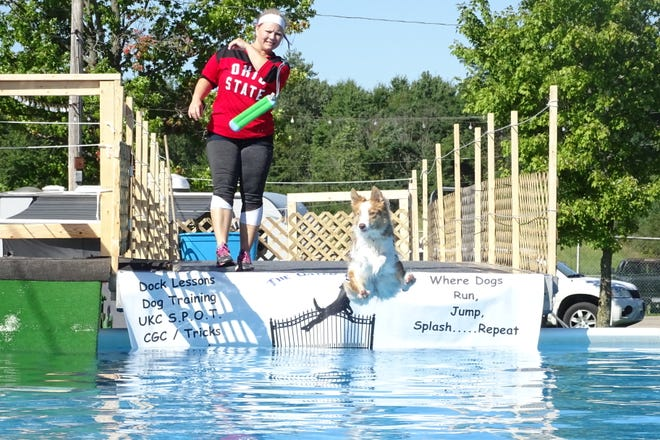 Velocity, a two-year-old border collie, dives into the pool at a previous Strutt Your Mutt event to chase a toy thrown by Hillary Swartz.