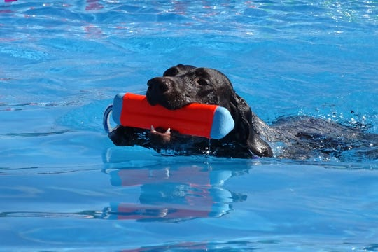 A dog swims with its toy Saturday during the Strutt Your Mutt event at the Richland County Fairgrounds.