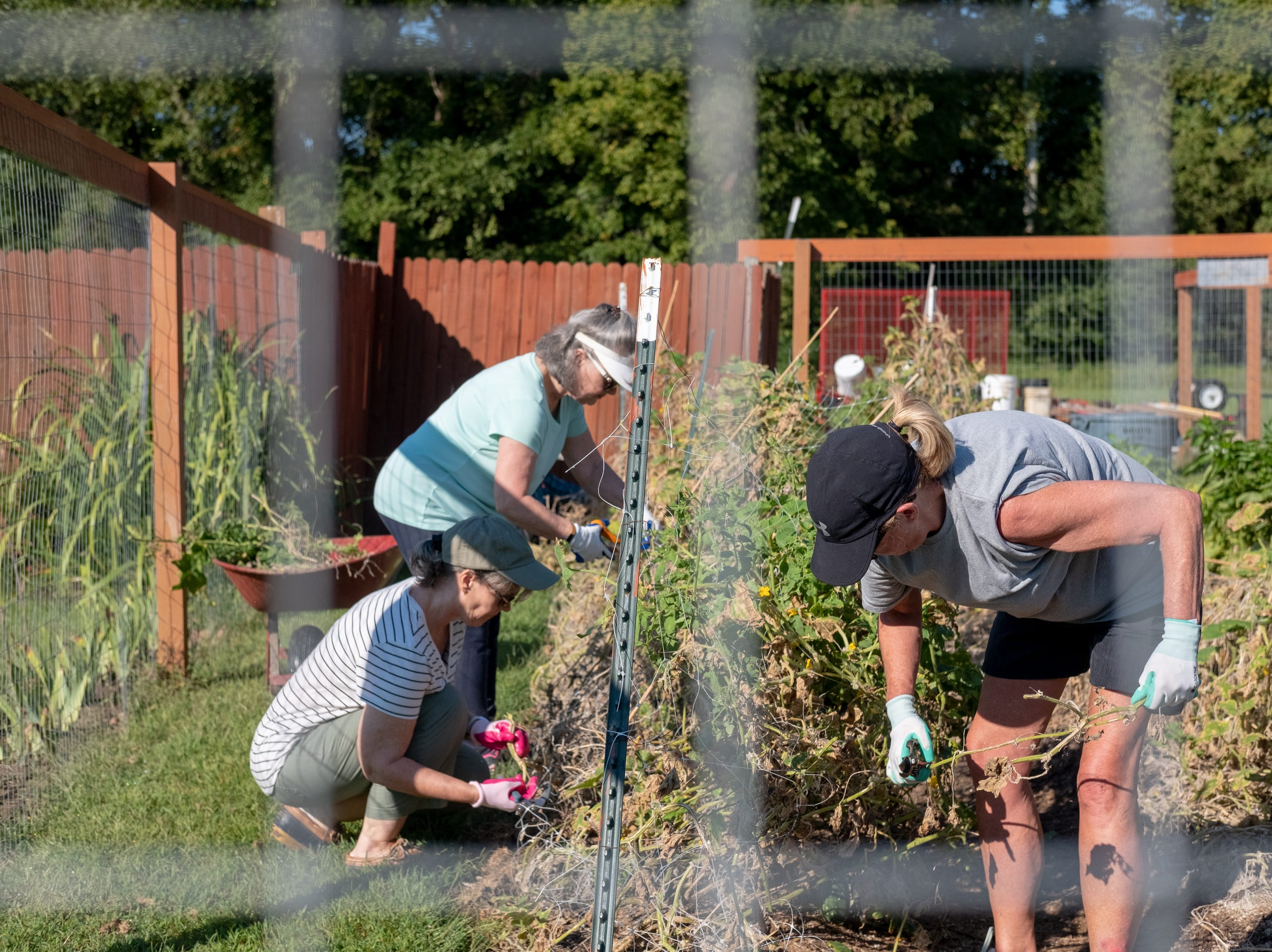 Volunteers work in the Epiphany Community Garden, clearing old plants on Saturday, Sept. 15, 2018.