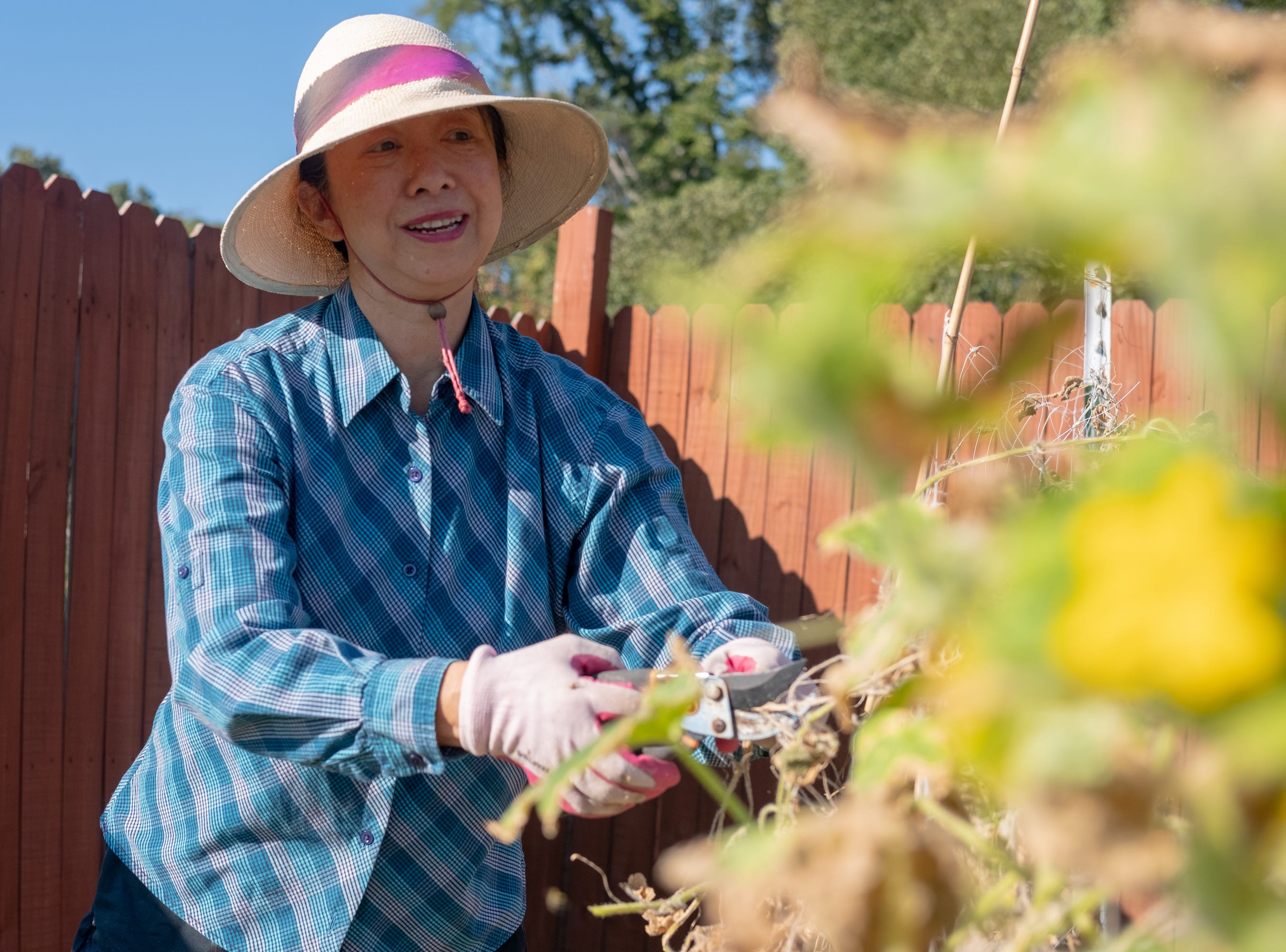Ting Ting Davis, a member of St. Andrews Episcopal Church, trims vines in the Epiphany Community Garden in Collierville on Saturday, Sept. 15, 2018.