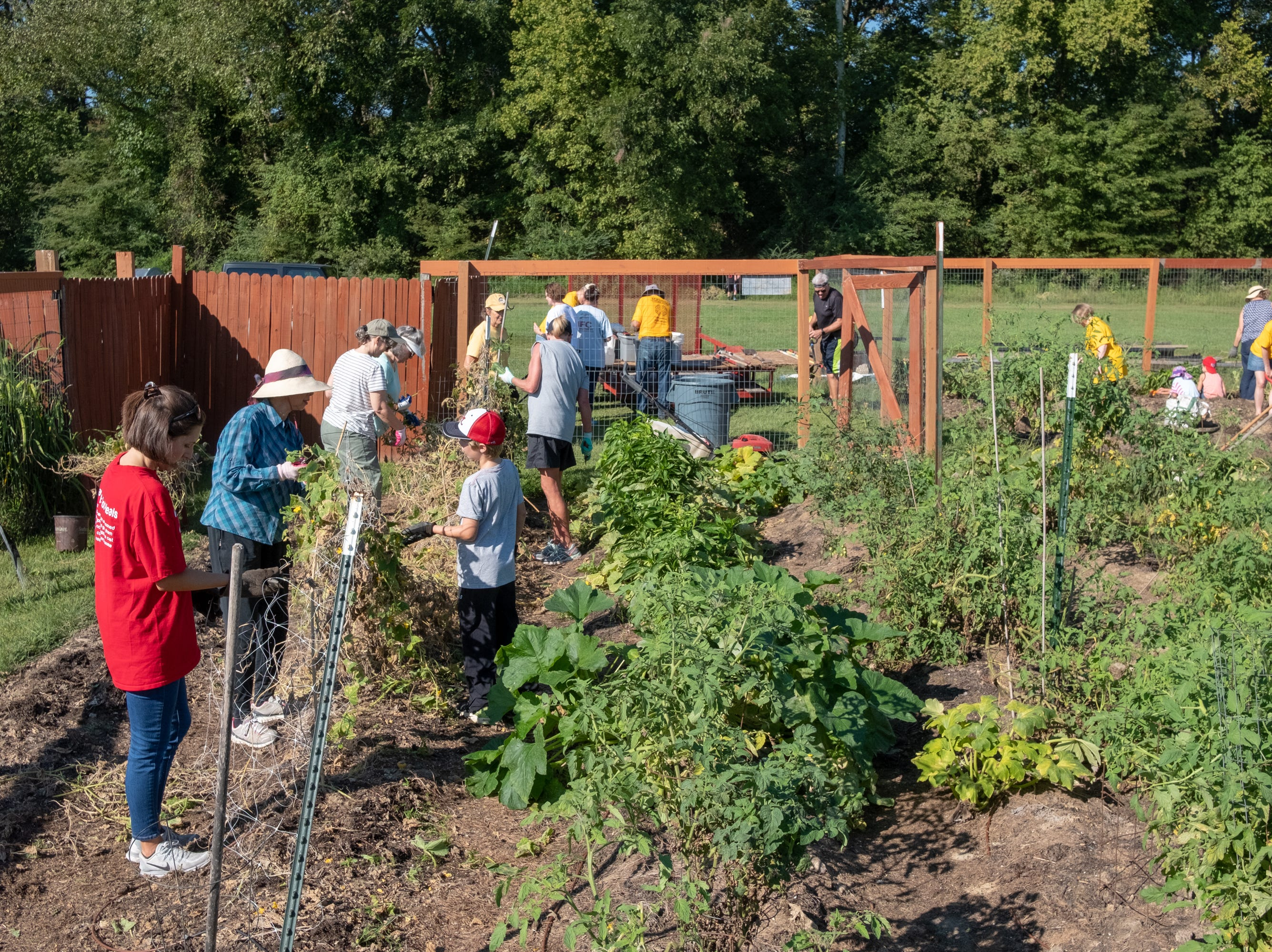 Volunteers harvest and clear old plants to prepare for the fall crop at the Epiphany Community Garden in Collierville on Saturday, Sept. 15, 2018.