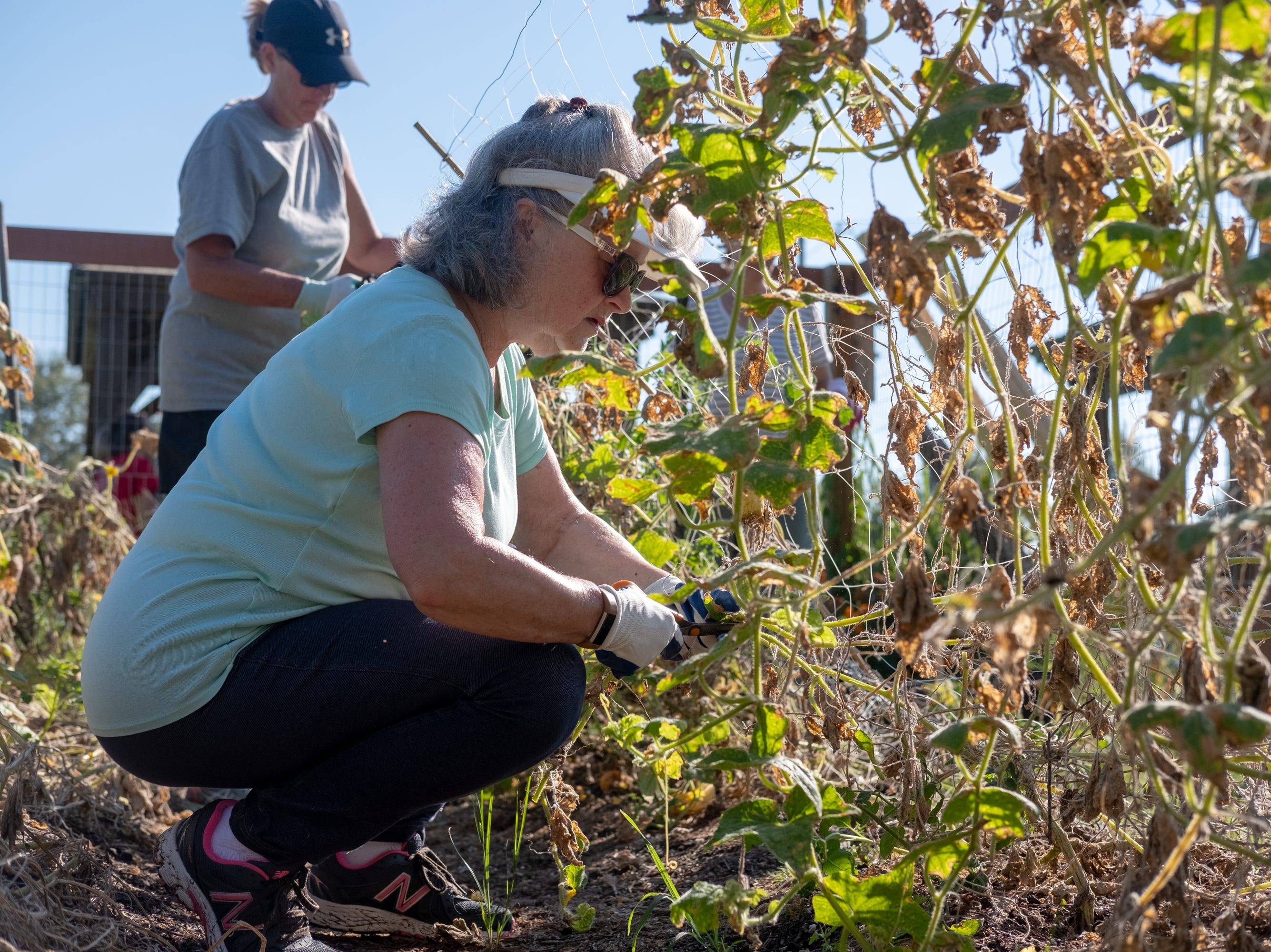 Barbara Jones clears out old cucumber plants at the Epiphany Community Garden in Collierville on Saturday, Sept. 15, 2018.
