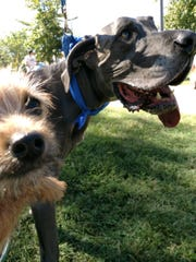 Tiny Bruce meets mighty Bruce at the Dog Day Festival in Centennial Park on Sept. 15. The two pups with the same name made friends at the annual event that raises money for the Nashville Humane Association.