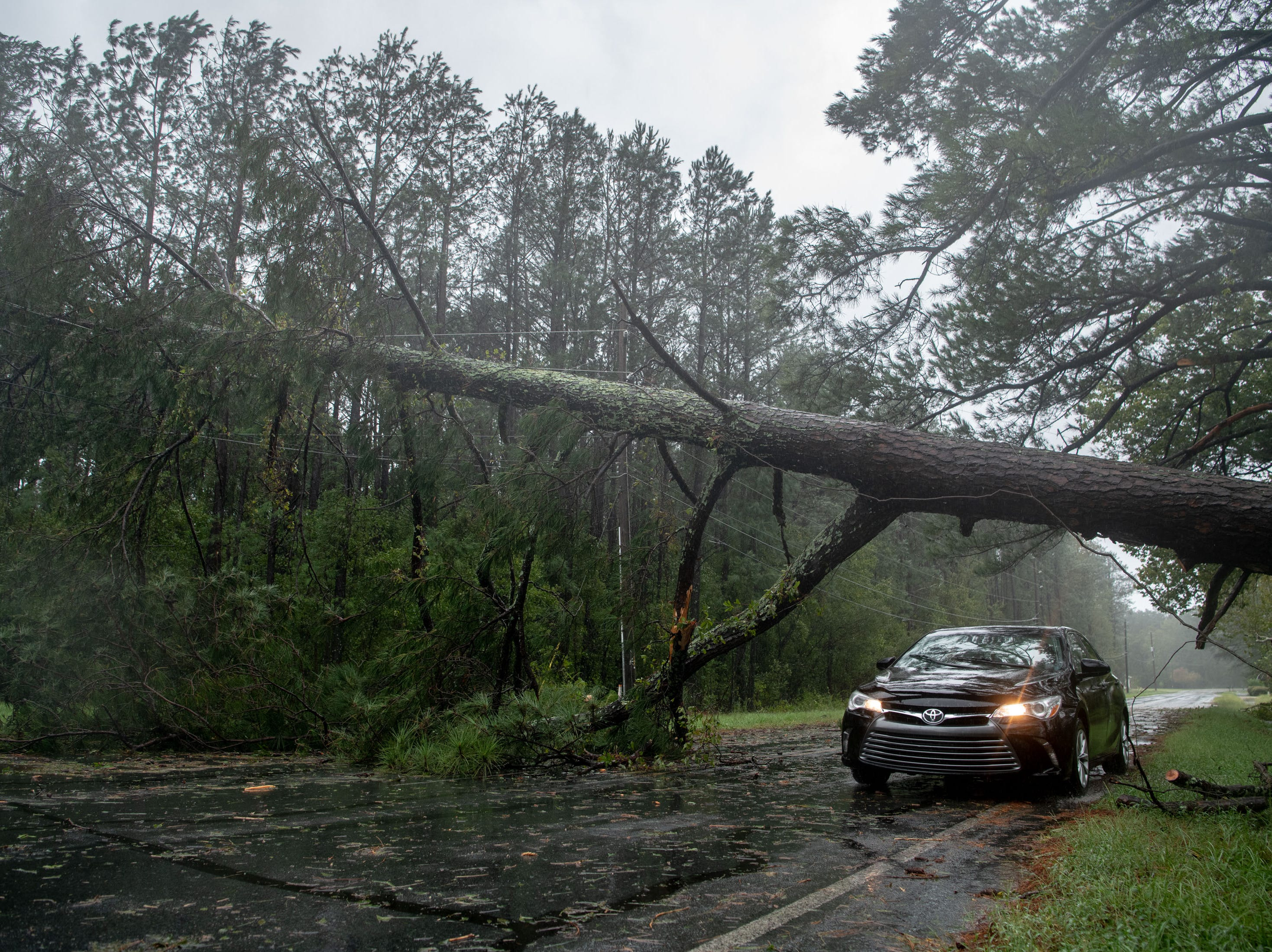 A car passes under a fallen tree as rain from Tropical Storm Florence continues to fall in Lumberton, N.C., Saturday, Sept. 15, 2018.