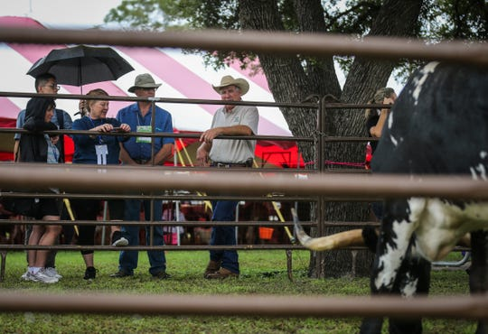 People gather to check out longhorn from the San Angelo State Park during River Fest Saturday, Sept. 15, 2018, in the Bosque.