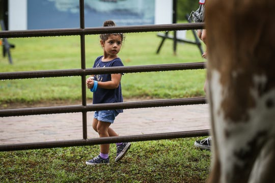 Maya Casey, 3, looks at longhorn from the San Angelo State Park during River Fest Saturday, Sept. 15, 2018, in the Bosque.