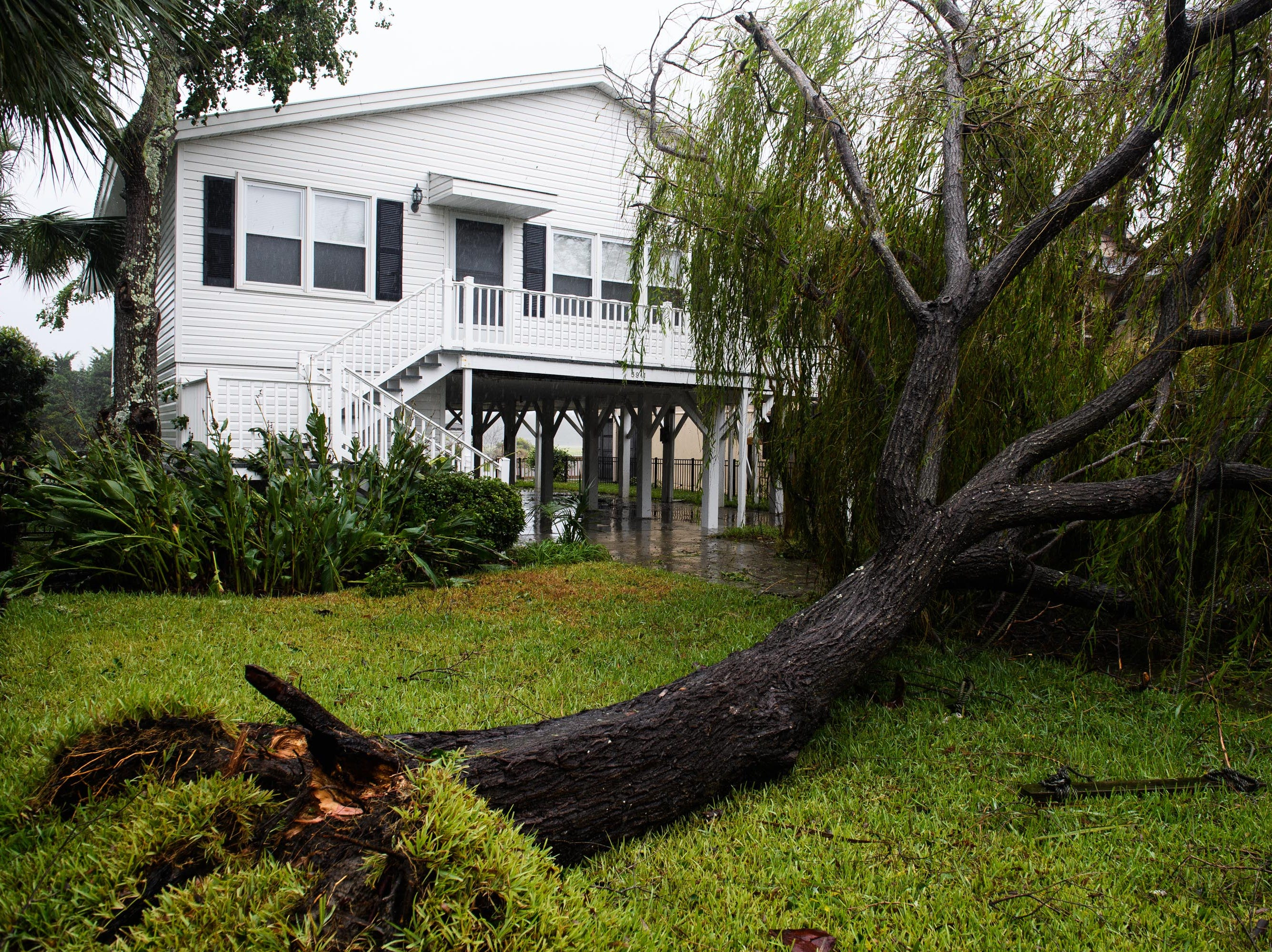 A downed tree sits in front of a home in North Myrtle Beach, S.C. on Saturday, Sept. 15, 2018.