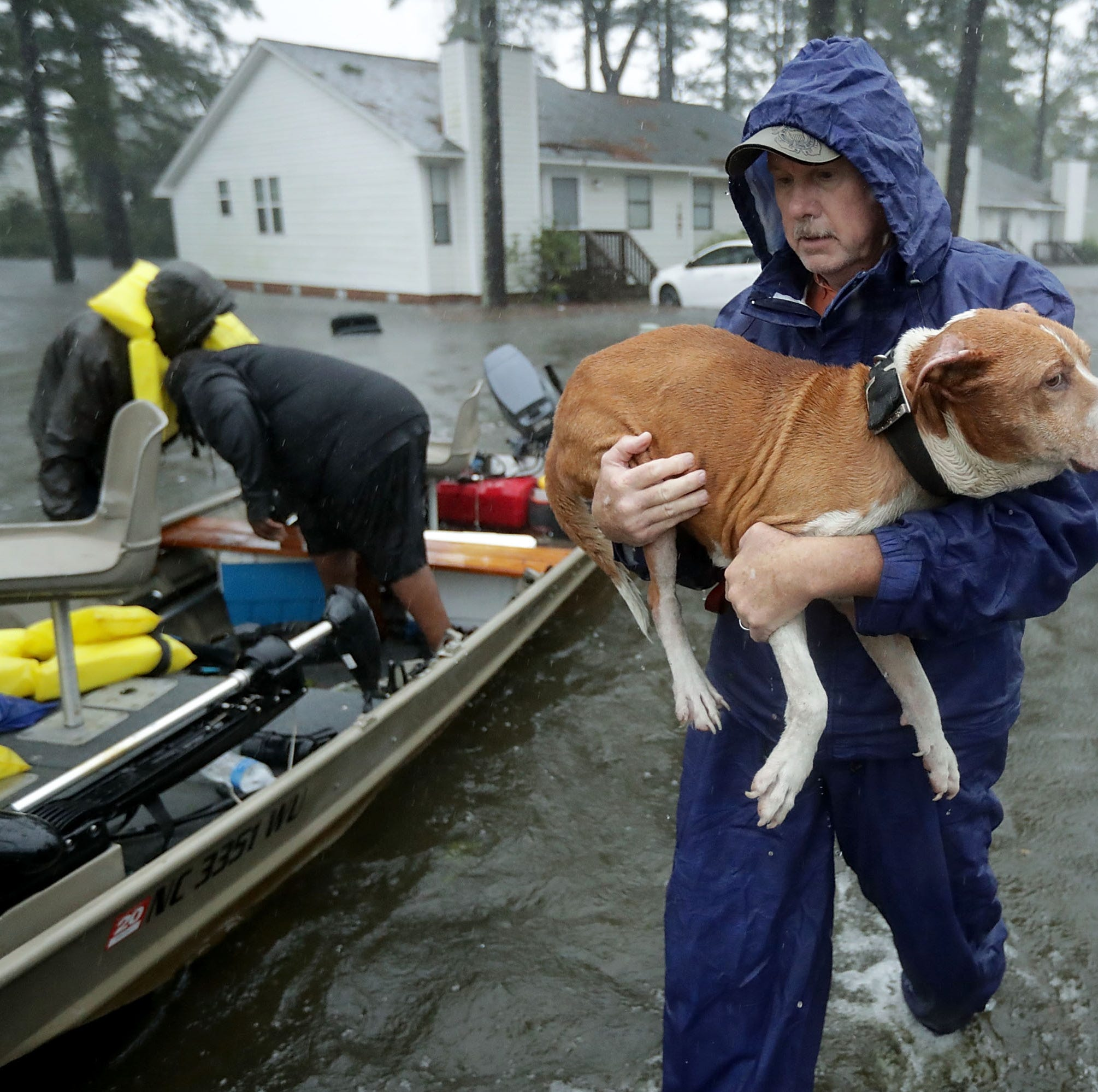 Hurricane Florence: Dogs and cats from North Carolina rescued by York County shelters