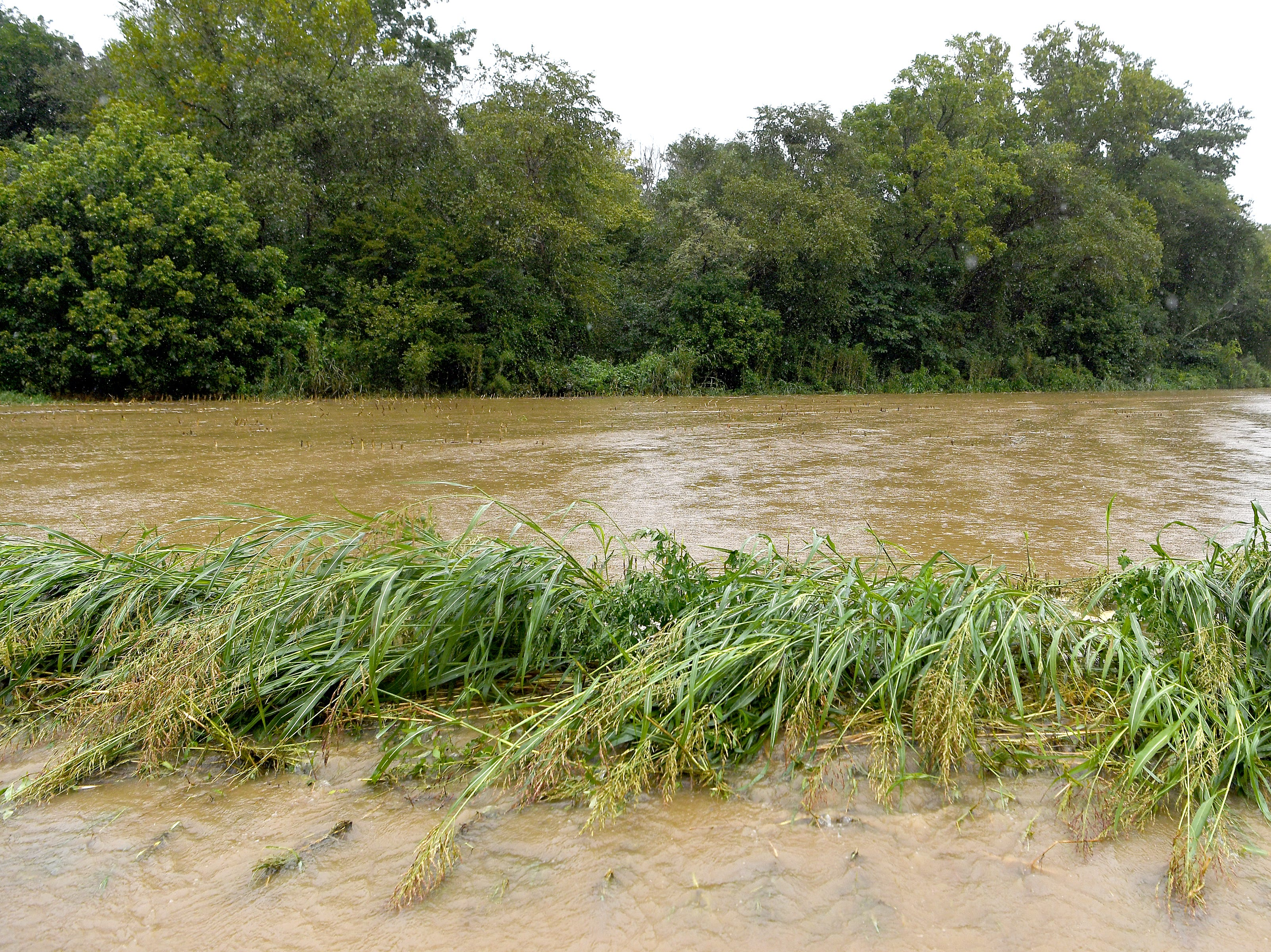 Cane Creek jumps its banks and covers Lower Brush Creek Road in Fletcher with water on Sept. 16, 2018. Hurricane Florence, now downgraded to a tropical depression brought sustained rain to the area.