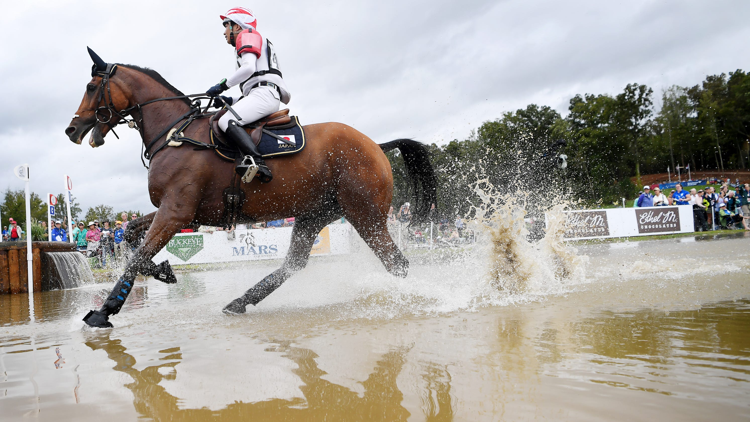 Aubepines Fei 1: FEI World Equestrian Games Cross Country