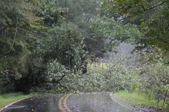 A fallen tree blocks North Fork Road in Black Mountain as Tropical Depression Florence brings heavy rains and winds to the area on Sept. 16.