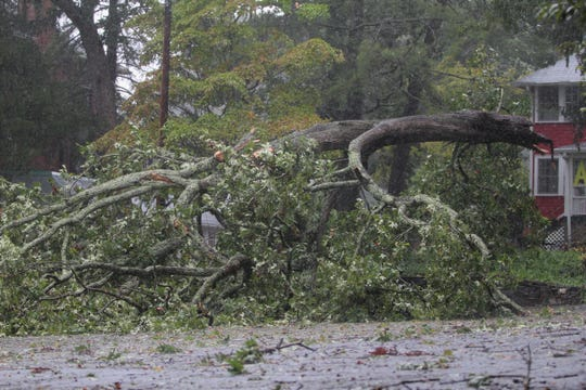 A large section of a tree falls in the parking lot in front of the Red House Studios and Gallery adjacent to the Monte Vista Hotel in Black Mountain around 11:40 a.m. on Sept. 16.