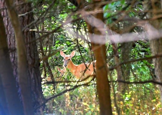 State: Don't eat deer in Oscoda due to PFAS chemical contamination