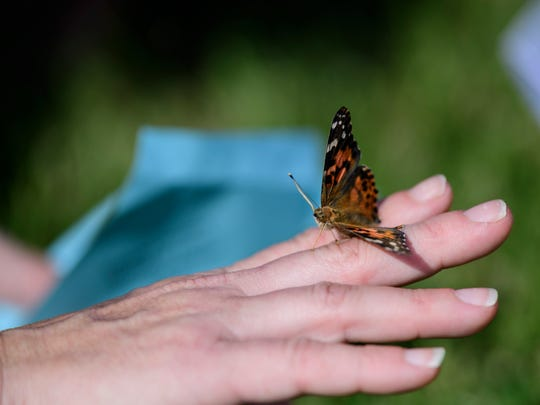"Jaime Hamilton, a former employee of Heritage Hospice, releases a butterfly to honor family members and patients who died during the eighth annual ""Wings of Love"" Celebration of Life ceremony and butterfly release at Christion Fellowship Church in Evansville, Ind., Saturday, Sept. 15, 2018. Hamilton worked for Heritage Hospice for over 10 years before taking a job at Toyota Motor Manufacturing."