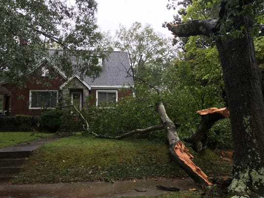 A mature oak tree on Randall Street in Greenville's North Main neighborhood near Stone Academy lost a major branch in the storm. Neighbors on the street report they lost power overnight.