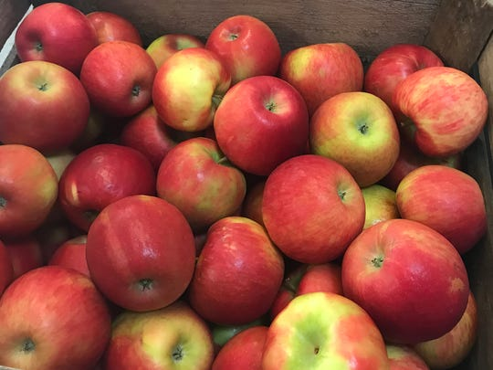 Apples, apples everywhere at the 32nd annual Apple Harvest Festival in Waukesha's Retzer Nature Center.