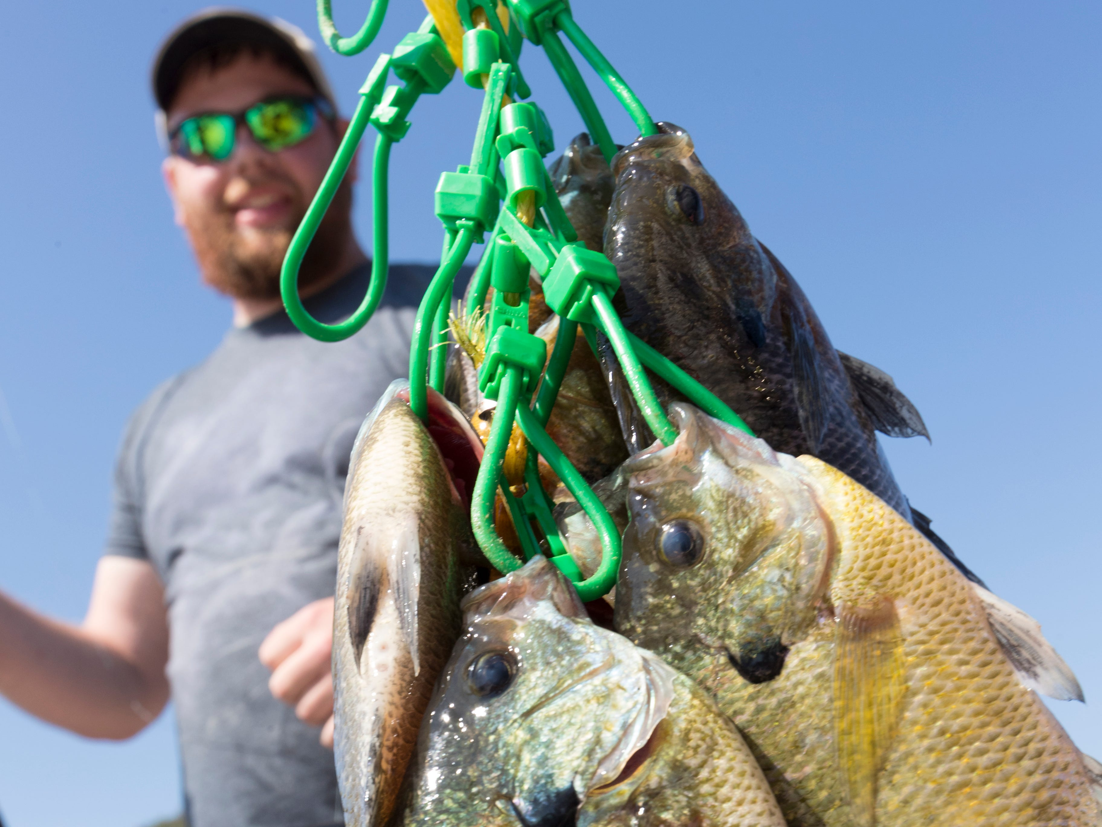 A stringer of bluegills is shown Sunday on the Best Dam Fishing Float on the Mississippi River in La Crosse.