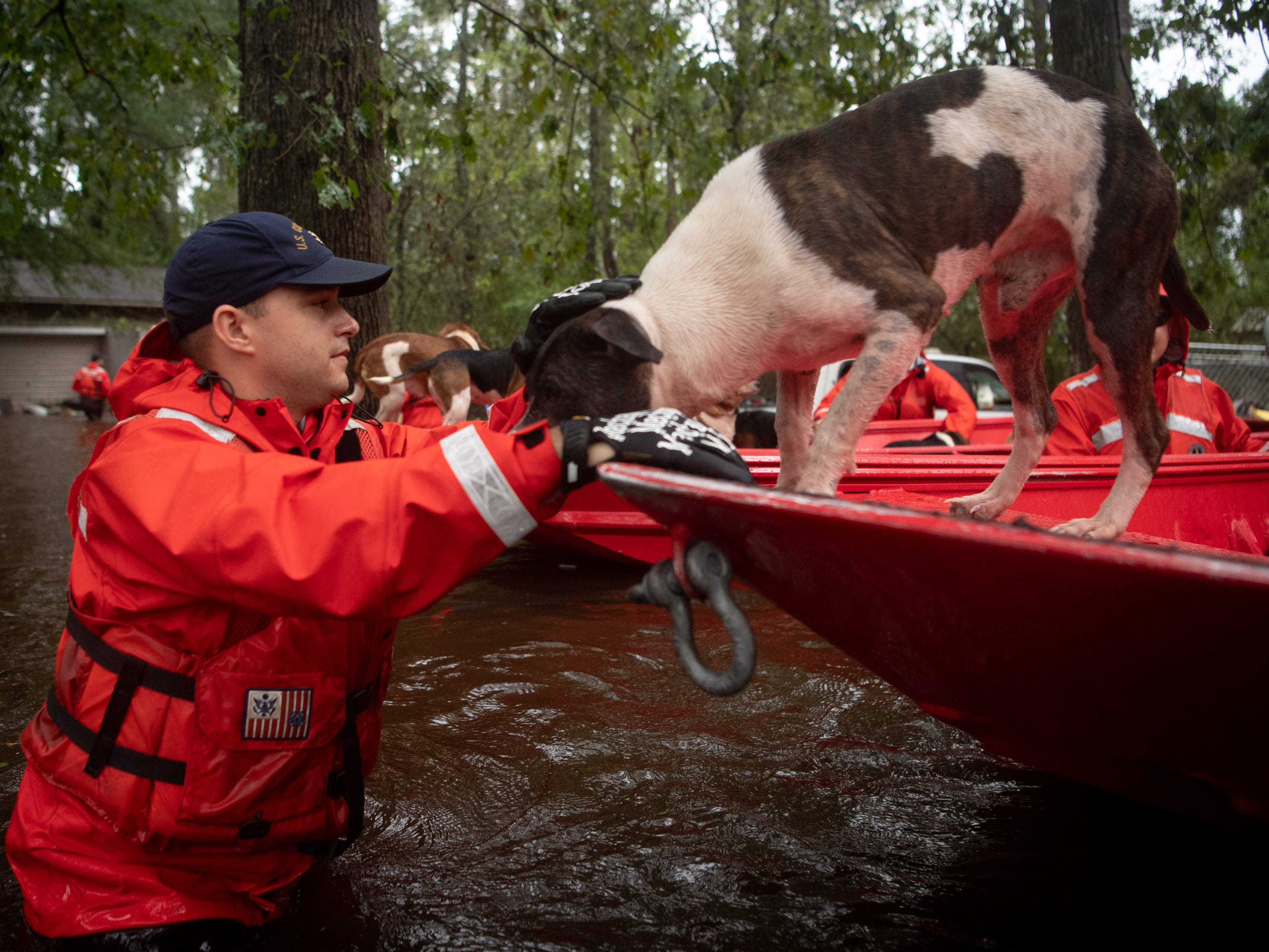 Coast Guard SN Javier Carrasquillo, of Louisville, Ky., helps rescue one of 14 dogs from a flooded home in Columbus County, N.C., Sunday, Sept. 16, 2018.