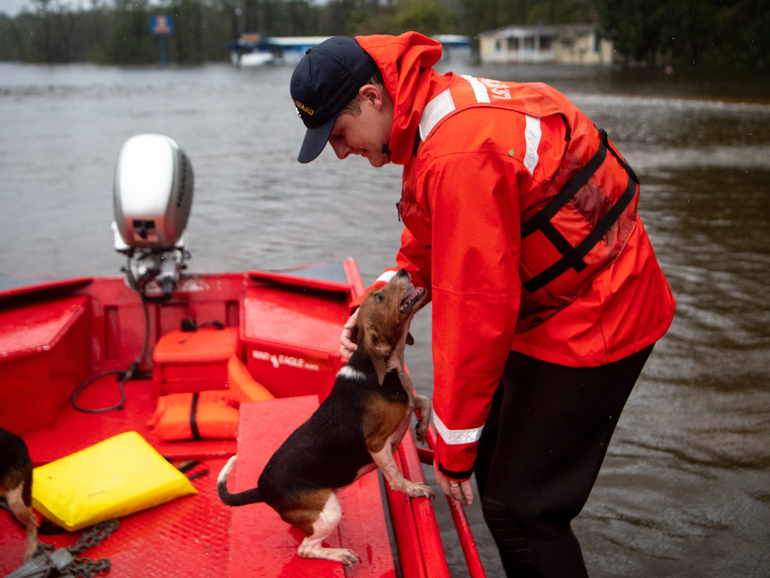 Coast Guard FN Tyler Elliott, from Louisville, Ky., comforts  one of ten beagles rescued from a flooded home in Columbus County, N.C., Sunday, Sept. 16, 2018.