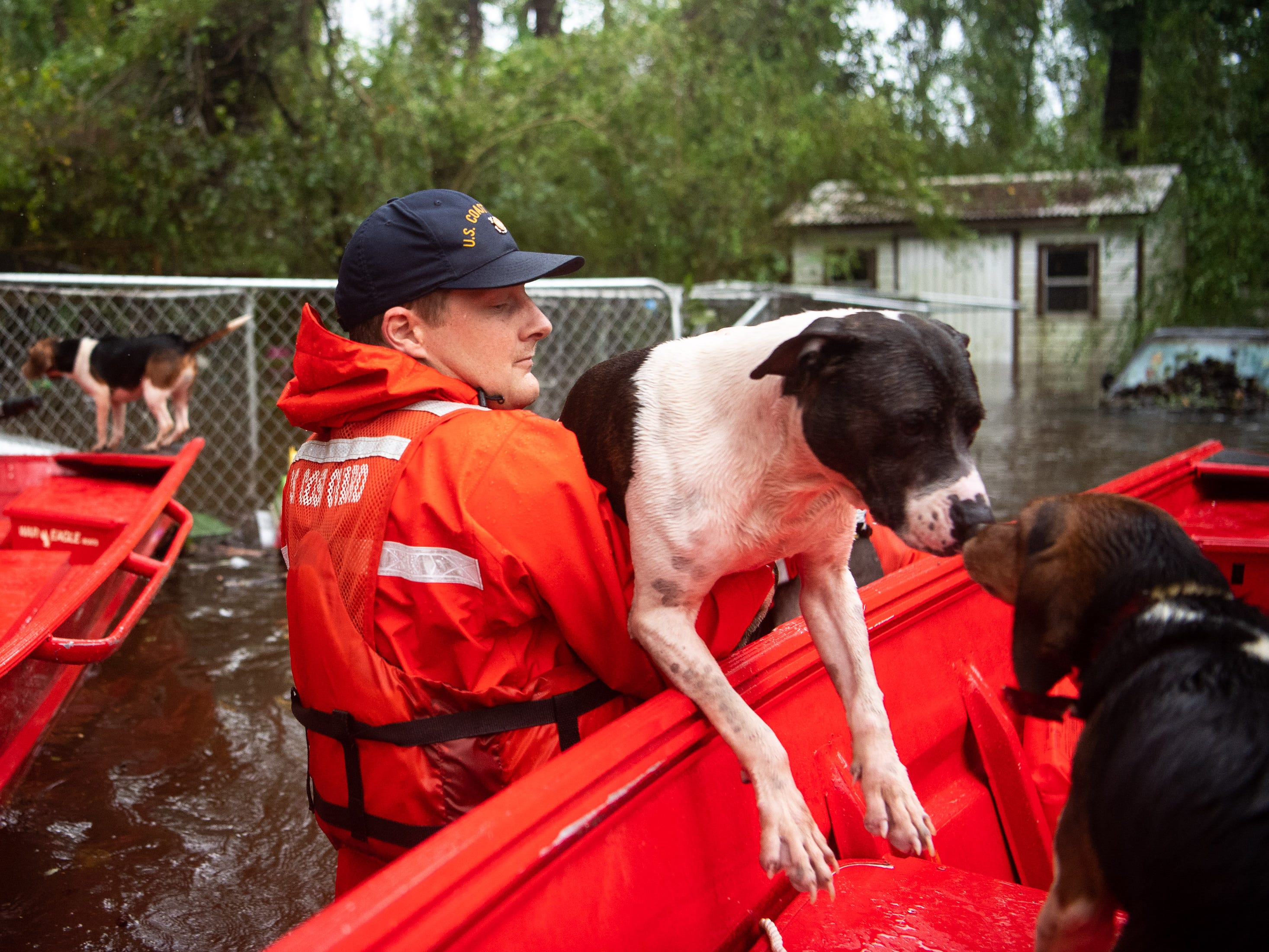 Coast Guard FN Tyler Elliott, from Louisville, Ky., helps rescue one of fourteen dogs from a flooded home in Columbus County, N.C., Sunday, Sept. 16, 2018.