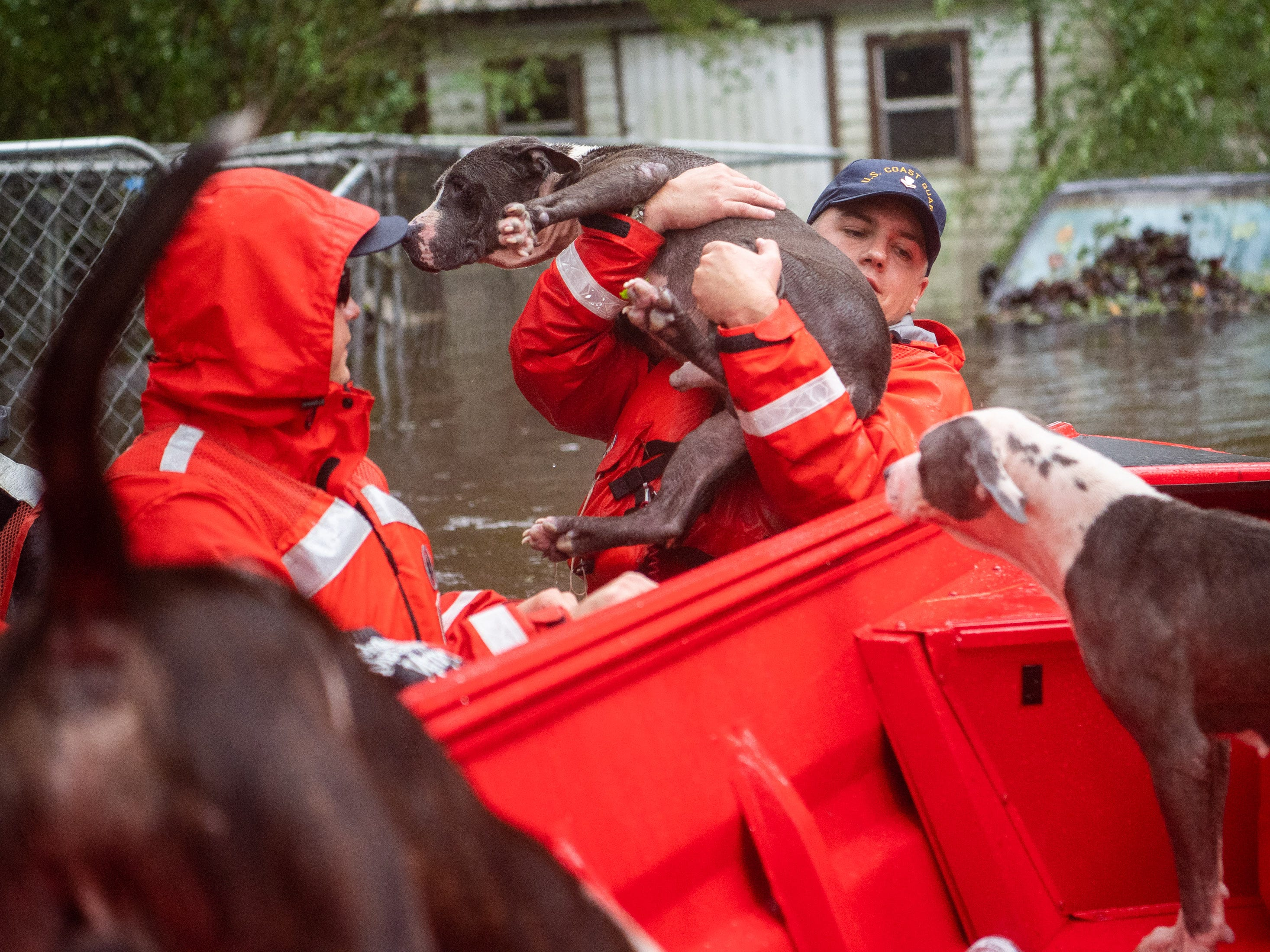 Coast Guard ME2 Blake Gwinn helps rescue one of fourteen dogs from a flooded neighborhood in Columbus County, N.C., Sunday, Sept. 16, 2018.