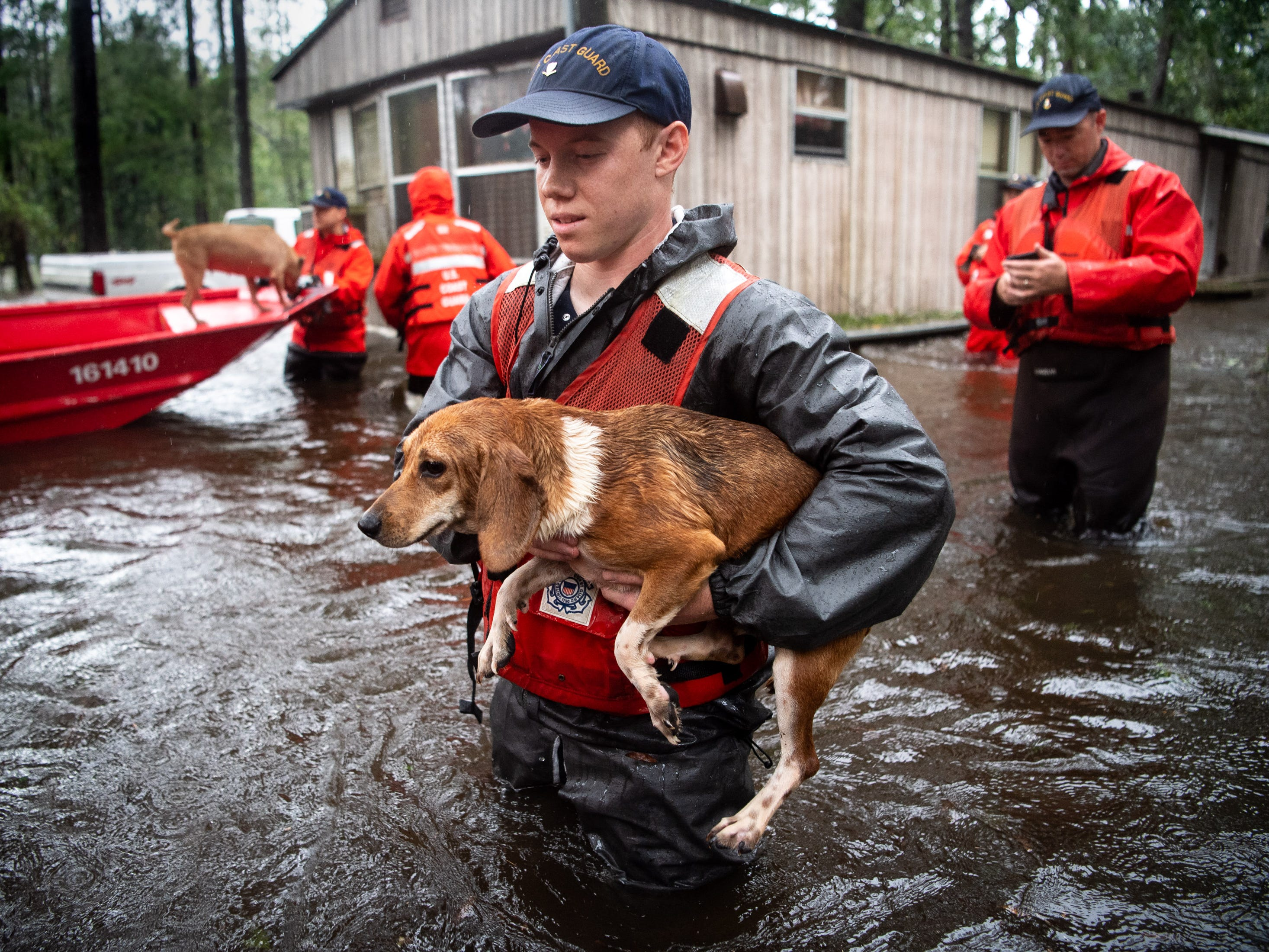 Coast Guard EM3 Kyle Lewis, Kittery, Maine, rescues one of ten beagles from a flooded home in Columbus County, N.C., Sunday, Sept. 16, 2018.