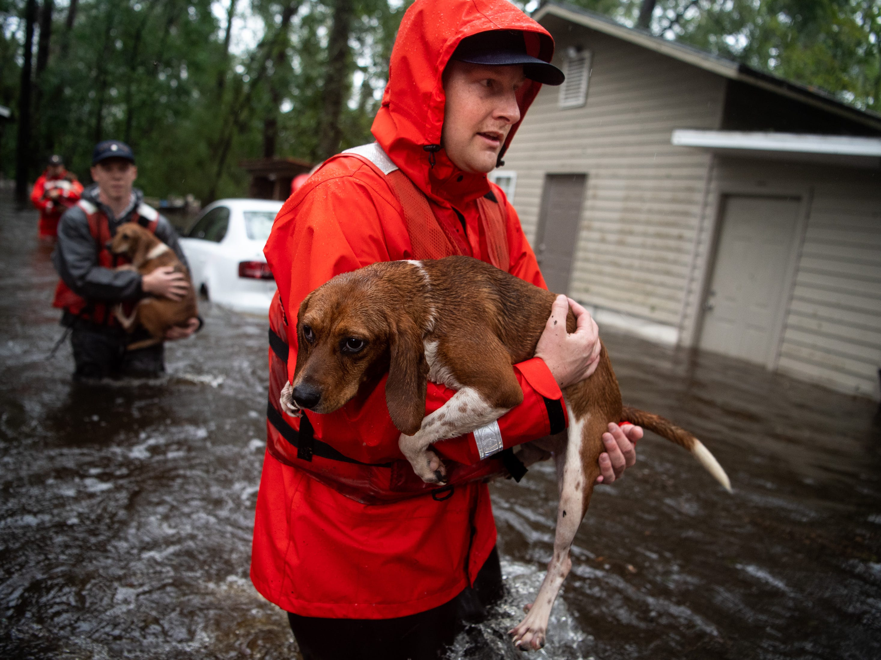 Coast Guard FN Tyler Elliott, from Louisville, Ky., helps rescue one of ten beagles from a flooded home in Columbus County, N.C., Sunday, Sept. 16, 2018.