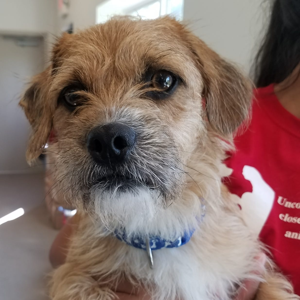 Ask the shelter: Can my dog get lice?