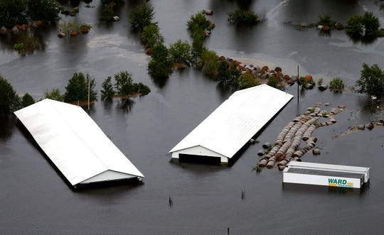 Hog farm buildings are inundated with floodwater from Hurricane Florence near Trenton, N.C., Sunday, Sept. 16, 2018. (AP Photo/Steve Helber)