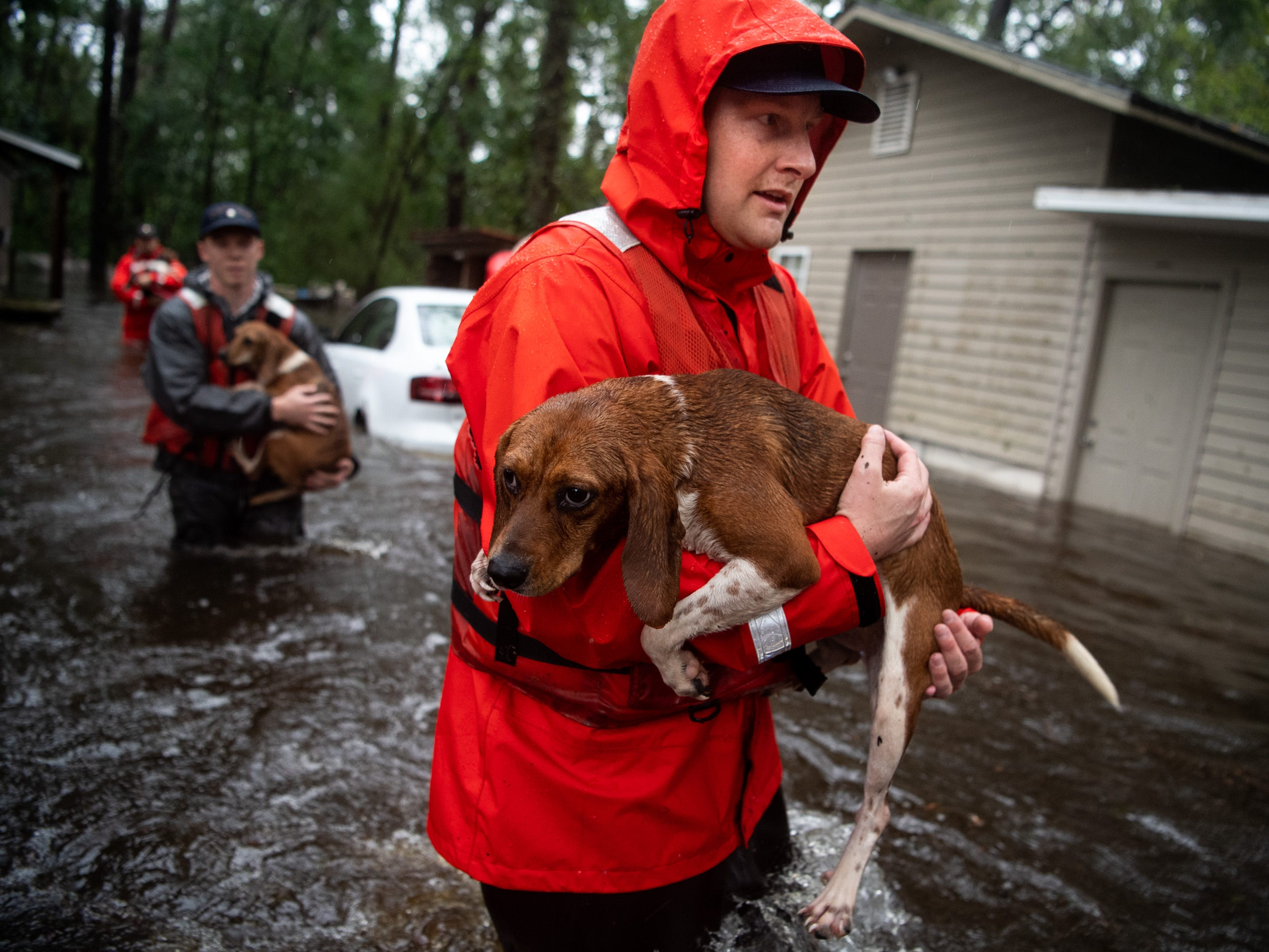 Coast Guardsman Tyler Elliott, from Louisville, Ky., helps rescue one of 14 dogs, including 10 beagles, from a flooded home in Columbus County, N.C., Sunday, Sept. 16, 2018.