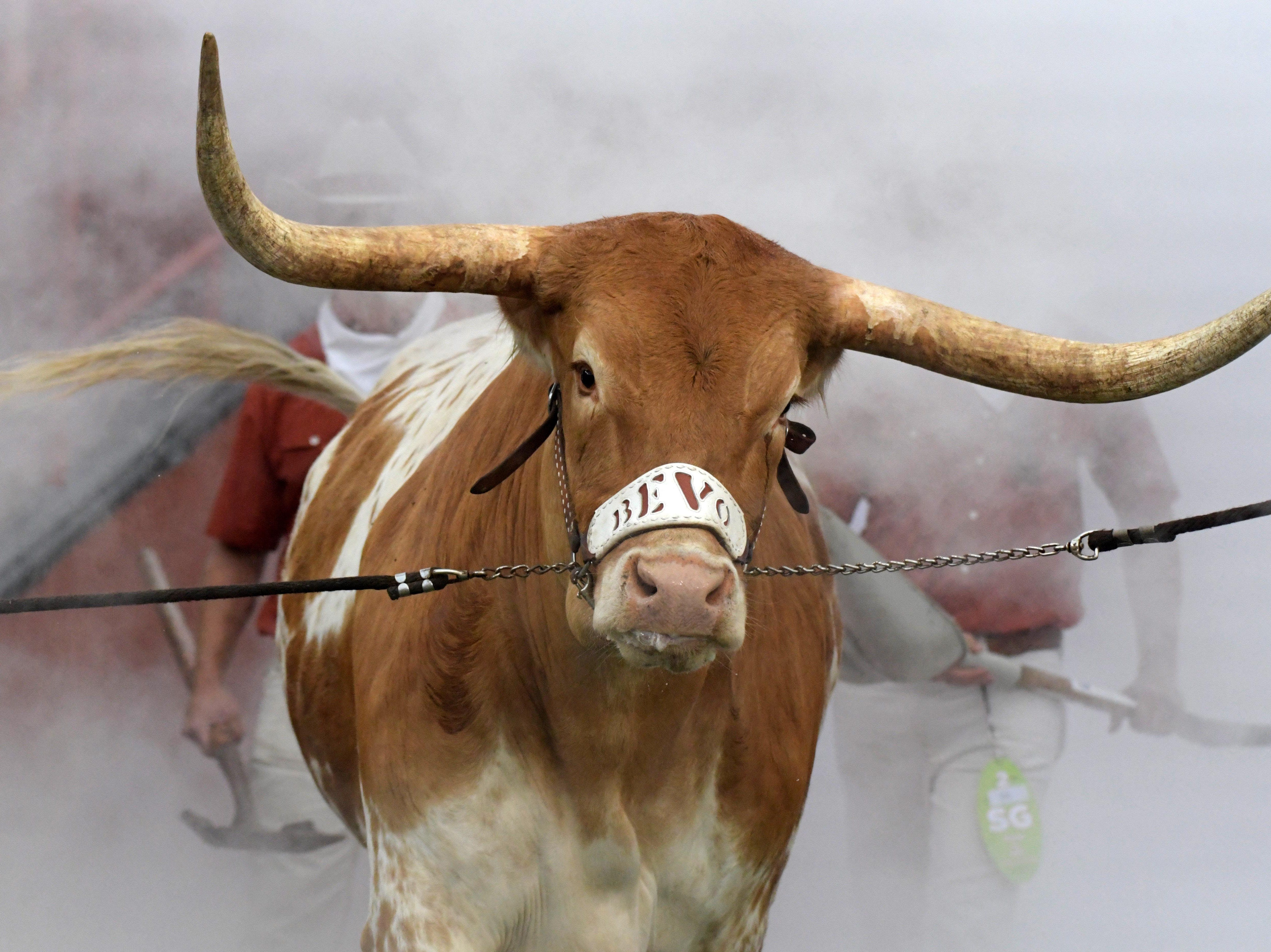 Week 3: Texas Longhorns mascot Bevo during the game against the Southern California Trojans at Darrell K Royal-Texas Memorial Stadium.