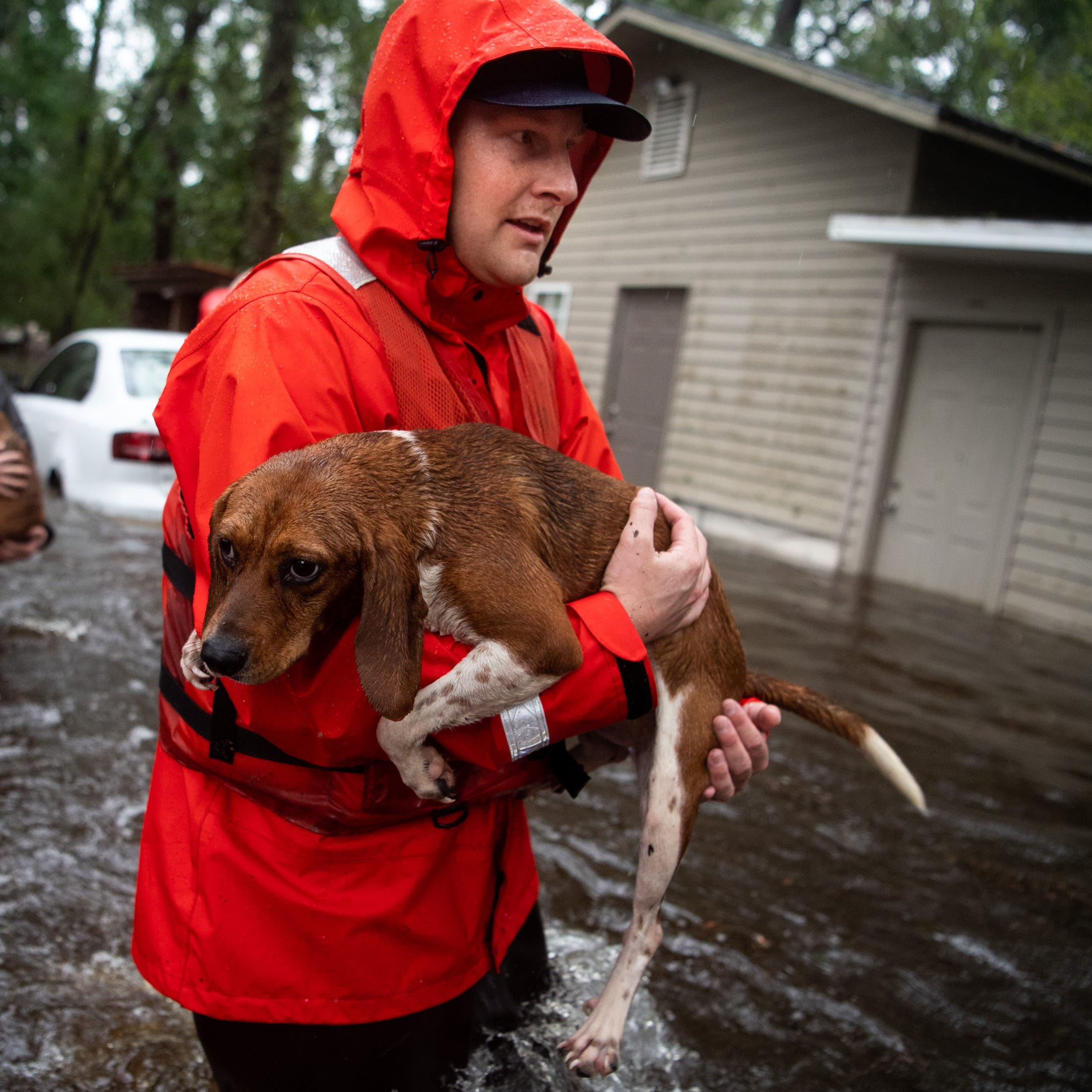 Coast Guard FN Tyler Elliott, from Louisville, Ky., helps rescue one of 14 dogs, including 10 beagles, from a flooded home in Columbus County, N.C., Sunday, Sept. 16, 2018.