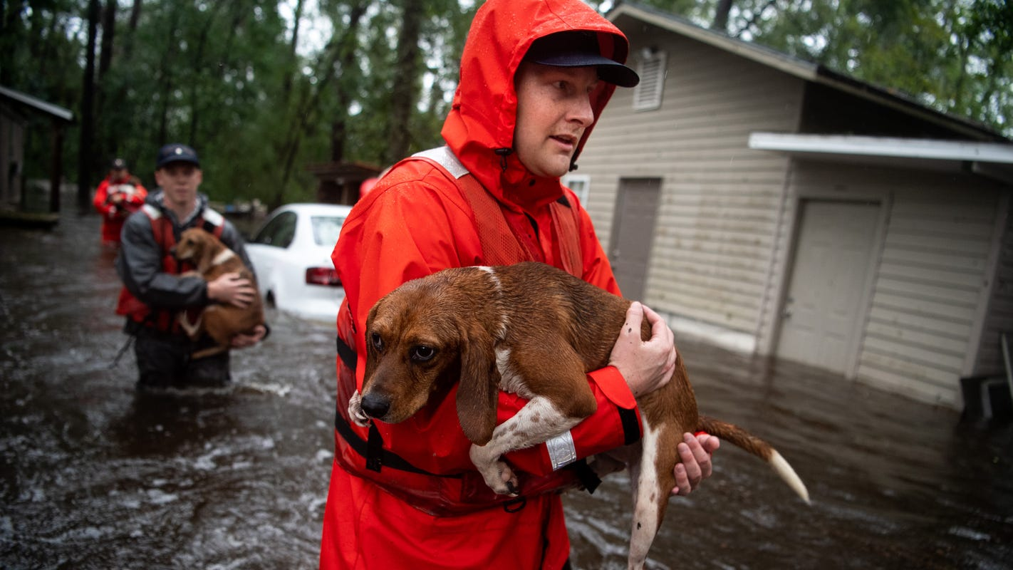 Hurricane Florence: Coast Guard plucks 10 dogs to safety