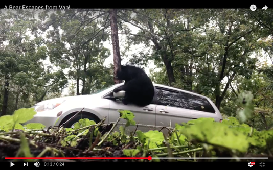 Bear escapes North Asheville van