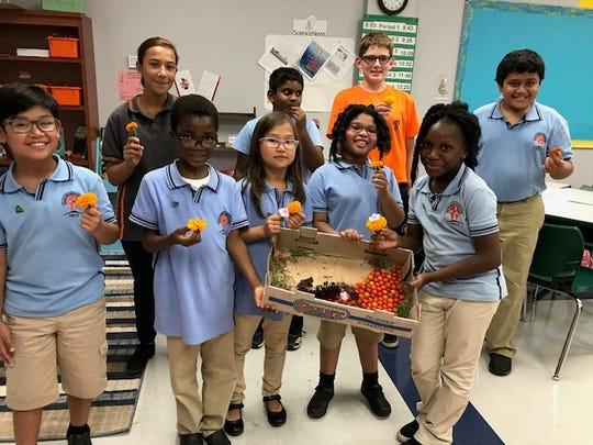 TEECS reaping the rewards of the school   garden green team.