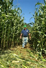 Farmer Bob Von Thun walks through the 3-acre corn maze he cut with a small tractor. He will have the trails ready for visitors this weekend. HNT/Joe McLaughlin