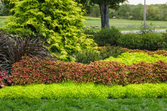 Coleus Pvg Gardens 007