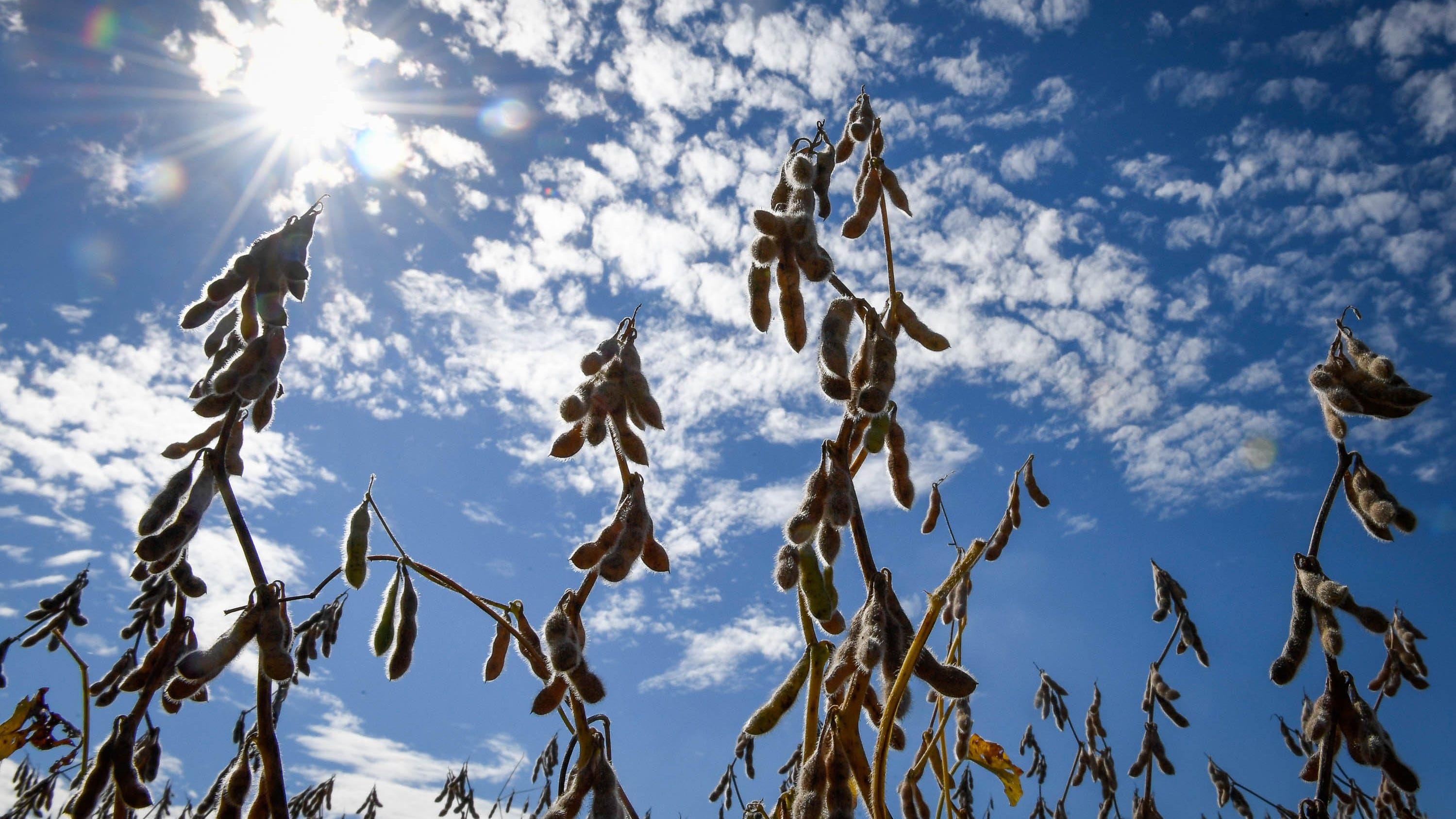Soybeans: China trade war 'couldn't come at a worst time' for South Dakota bumper crop