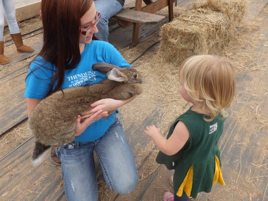 Bunnies, geese, ducks, fish, goats and other wildlife roam Waldvolgel's Pumpkin Farm.