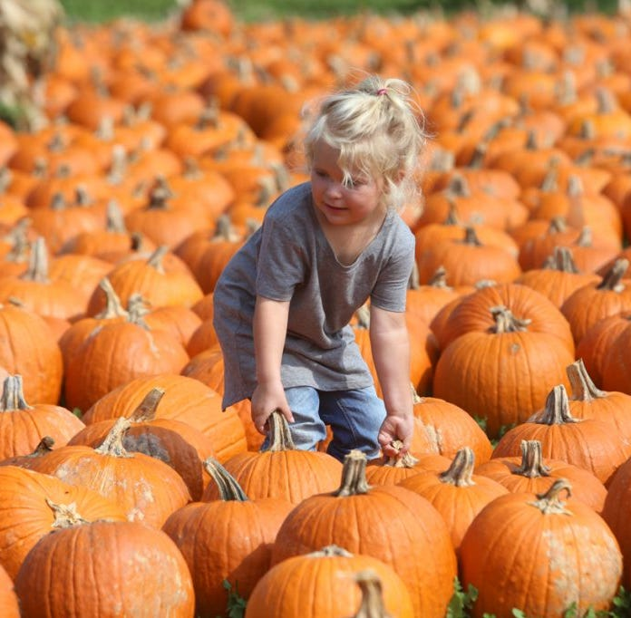Not just a pumpkin patch: Waldvogel's Farm offers more than 50 attractions