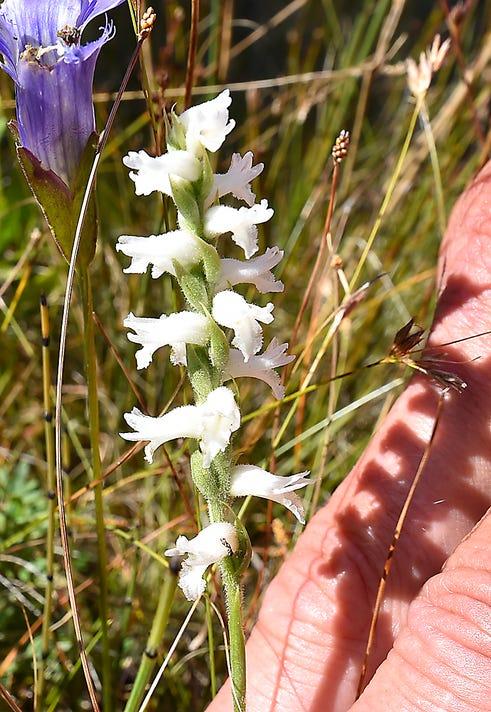 Dca 0919 Orchid Symposium 2