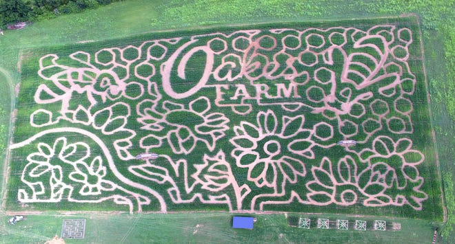 Oakes Farm features a daylily design for its 2018 maze.