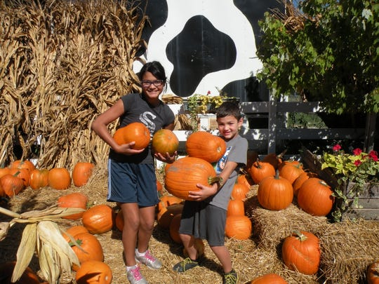 Families can find pumpkins at Apple Holler.