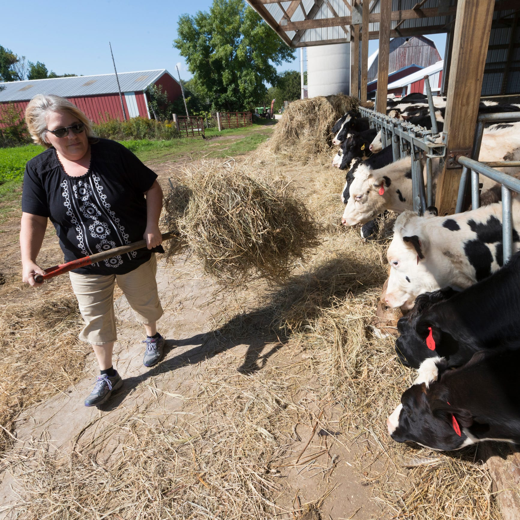 Wisconsin dairy farmers, in debt and out of options, turn to GoFundMe for bailout