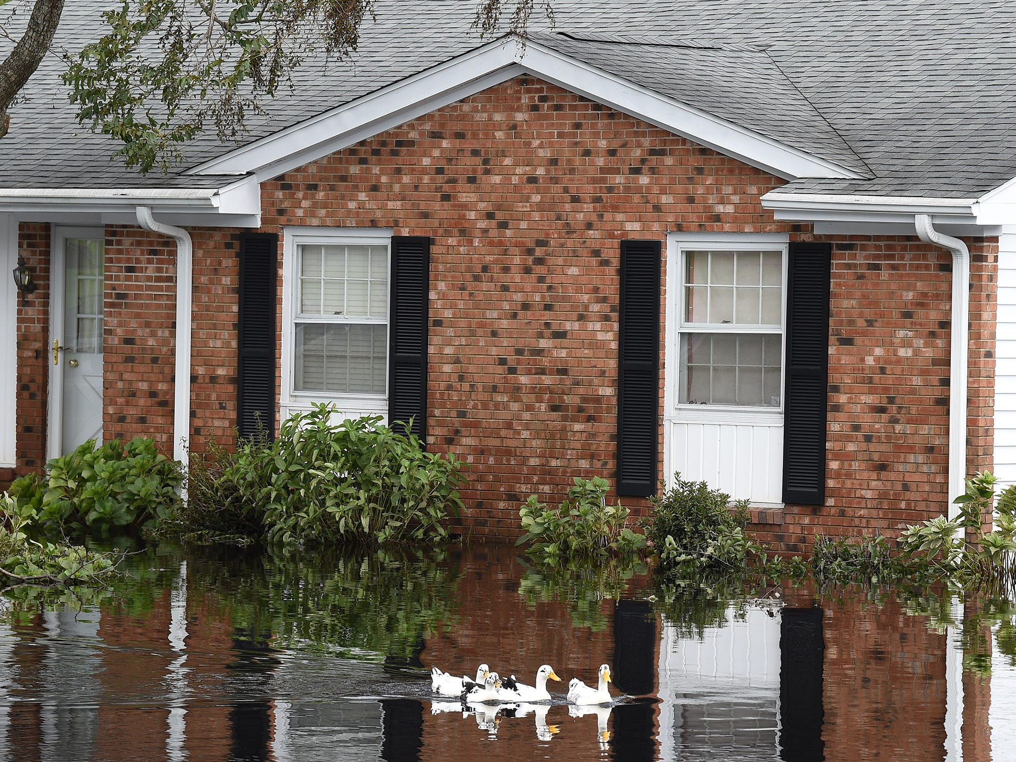 Ducks swim in a flooded neighborhood in Newport, N.C., on Monday, Sept. 17, 2018.