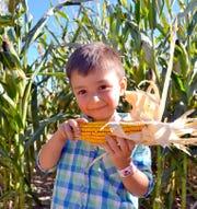 The Mesilla Valley Corn Maze officially opens for the fall season on Sept. 28, 2019.