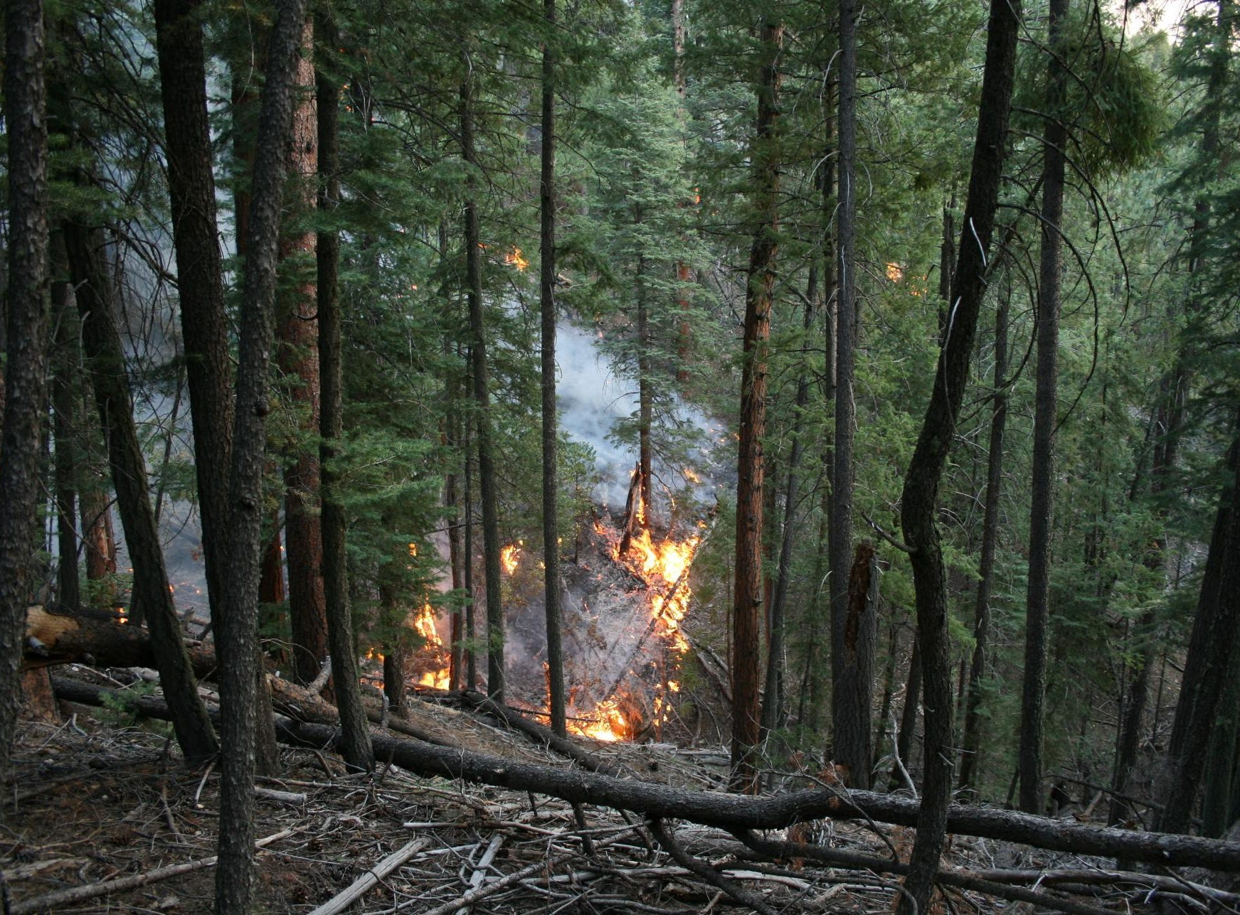 The Platypus Fire burns among trees and down logs.
